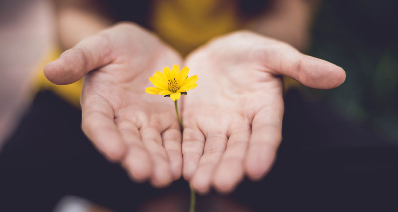hands holding a flower for meditation
